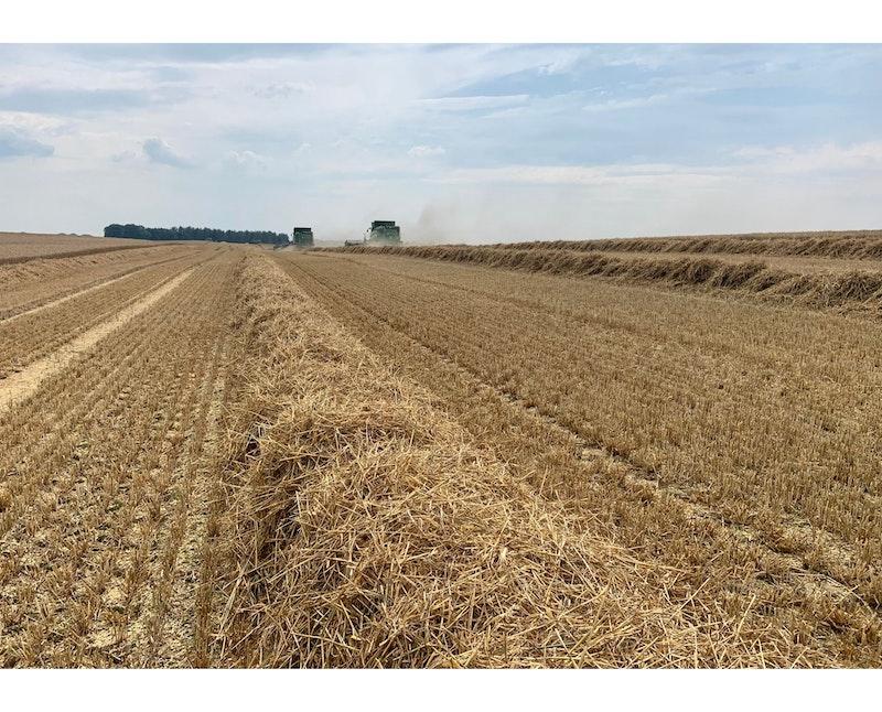 Zwischenbericht Weizenerträge